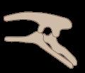 Estructura cadera dinosaurio ornitisquio